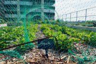 Urban Farming an der Seine