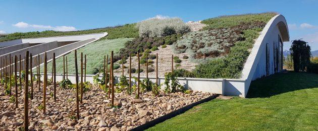 Weinkellerei mit begrüntem Tonnendach
